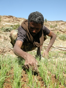 Hagos on his farm after the drought